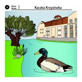 Fauna i flora rzeki Legi. strona 4